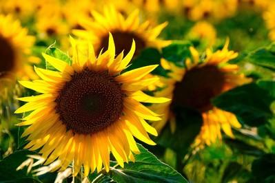 Zaprzyjaźnij się ze słońcem!