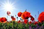 Co pyli w lipcu 2021? Kalendarz pylenia jasno wskazuje na trawy, pokrzywę i grzyby